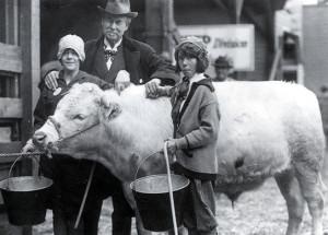 1930-steer