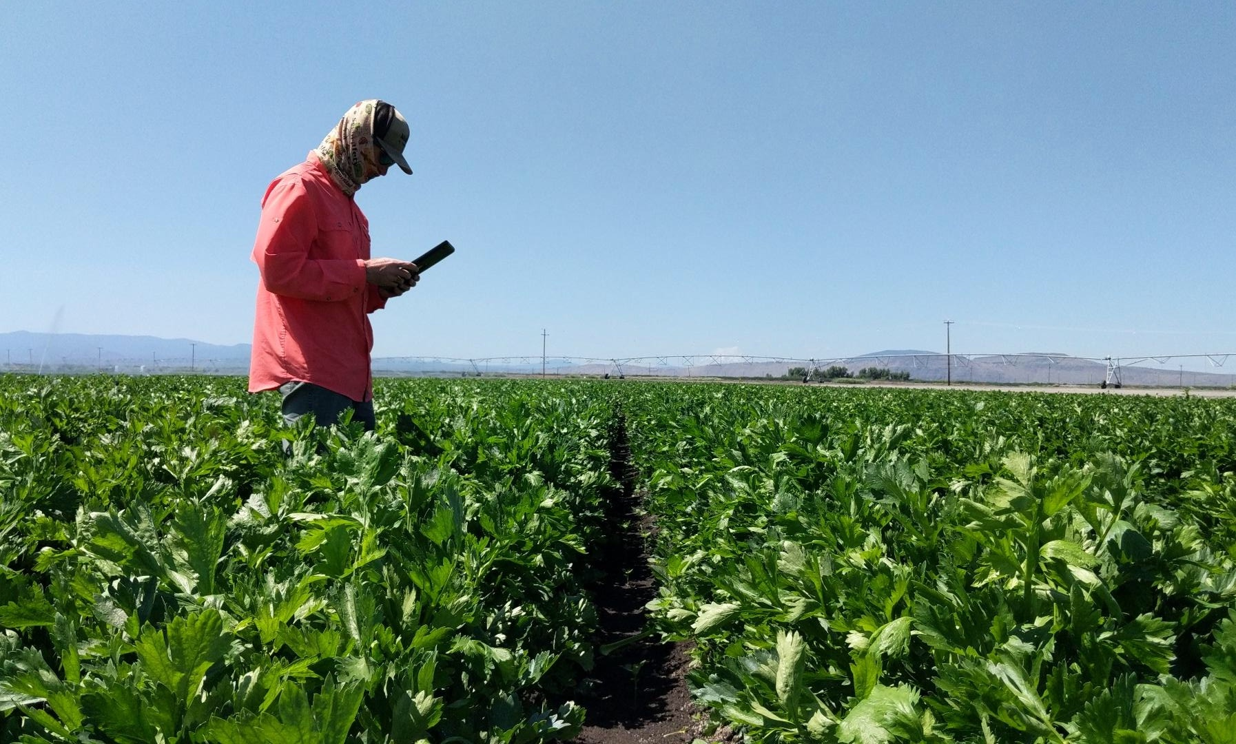 Ryan Tomlin checking his tablet in a field image